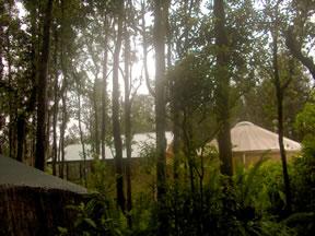 My jungle home.